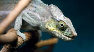 Animal Chameleon 2880x1800 Wallpaper