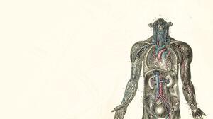 Artistic Human Organs 1680x1050 Wallpaper
