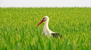 Bird Stork White Stork Wildlife 2048x1365 Wallpaper