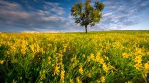 Field Flower Meadow Sky Summer Tree Yellow Flower 2048x1360 Wallpaper