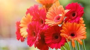 Flower Gerbera 5120x2880 wallpaper