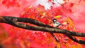 Bird Branch Tree Wildlife 2000x1333 wallpaper