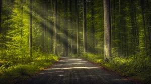 Dirt Road Forest Nature Sunbeam Tree 6144x3760 Wallpaper