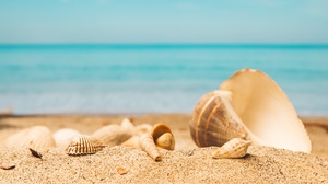 Depth Of Field Nature Sand Shell 5041x3361 wallpaper
