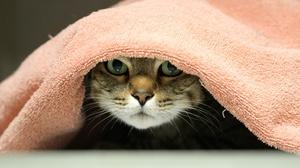 Cat Pet Stare 2048x1154 Wallpaper
