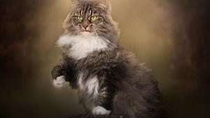 Animal Cat 3840x2400 wallpaper