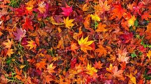 Fall Foliage Leaf 5120x2880 Wallpaper
