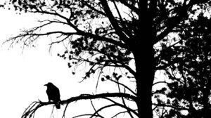 Crow Black Amp White 1645x1120 Wallpaper