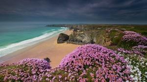 Beach Coast Cornwall England Flower Horizon Nature Ocean 4700x3005 wallpaper