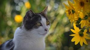 Bokeh Cat Pet Yellow Flower 3840x2160 Wallpaper