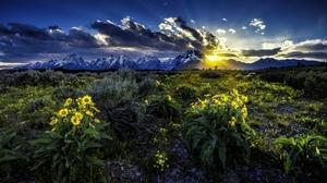 Dawn Flower Grand Teton National Park Meadow Rocky Mountains Sunrise Wyoming 2560x1440 Wallpaper