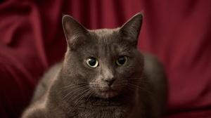 Cat Pet 2048x1366 Wallpaper