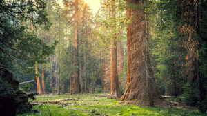 Nature Greenery Sunlight Tree 4200x2800 wallpaper