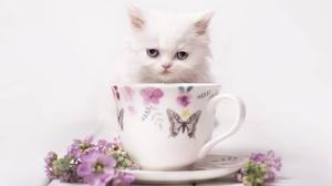 Cat Cup Pet Stare 1920x1269 wallpaper