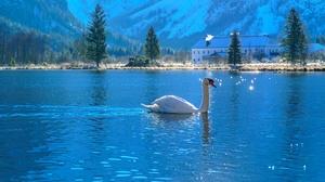 Bird Lake Swan Wildlife 2048x1365 Wallpaper