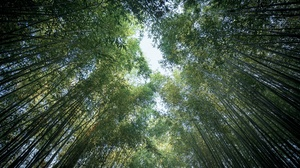 Bamboo Greenery Nature 2048x1365 Wallpaper