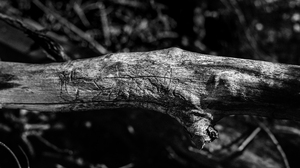 Nature Wood Tree Bark Monochrome Outdoors Photography Contrast Dead Trees 5755x3237 wallpaper