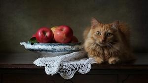 Apple Pet Fruit 2048x1310 Wallpaper