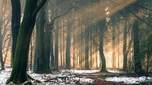Forest Nature Sunbeam Tree Winter 2560x1640 Wallpaper