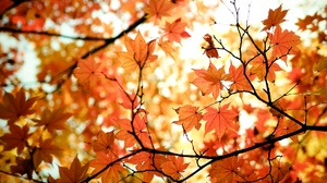 Fall Nature Maple Leaf 2048x1152 wallpaper