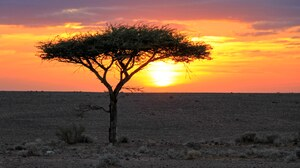 Africa Algeria Desert Landscape Sahara Sunset Tree 5184x2750 wallpaper
