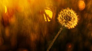 Bokeh Close Up Dandelion Nature 2048x1365 Wallpaper