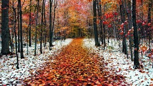 Earth Fall Forest Frost Path Snow 1920x1080 Wallpaper