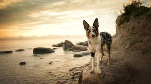 Border Collie Depth Of Field Dog Pet 2048x1367 Wallpaper