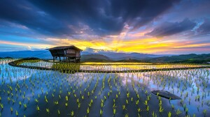 Rice Paddy Hut Terraces Water Mountains Clouds Yellow Blue Farm Sun Rays Nature Landscape 1280x854 Wallpaper