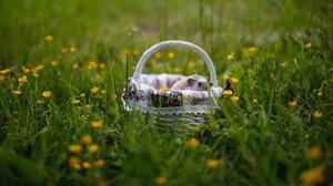 Grass Flower Blur Basket 3840x2160 Wallpaper