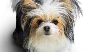 Dog Animal 2560x1440 Wallpaper