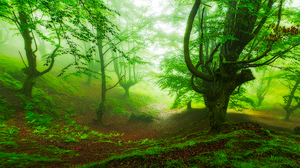 Nature Forest Tree Greenery 1920x1280 Wallpaper