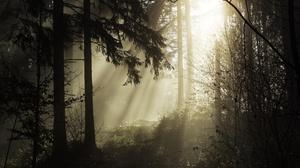 Fog Forest Sunbeam Tree 3861x2895 Wallpaper