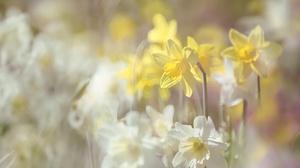 Blur Daffodil Flower Nature Summer White Flower Yellow Flower 2048x1365 Wallpaper