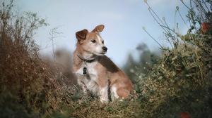 Animal Dog 2048x1365 Wallpaper