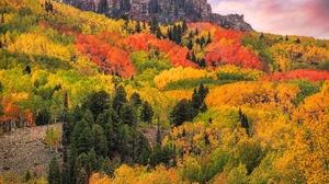 Forest Cloud Mountain Colorado San Juan Mountains 2000x1600 Wallpaper