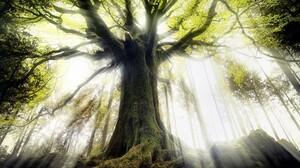 Tree Sunshine Sunbeam 2030x1330 Wallpaper