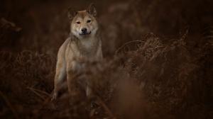 Dog Fern Stare Wildlife 5472x3648 Wallpaper