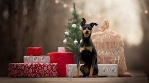 Dog Pet Baby Animal Puppy Gift Depth Of Field 2048x1363 Wallpaper