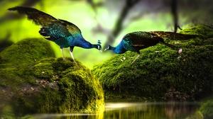 Bird Stone Moss Wildlife 2048x1365 wallpaper