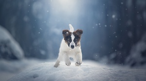 Dog Animals Mammals Snow Outdoors Winter Cold Nature 2048x1308 Wallpaper