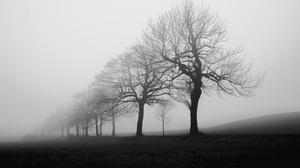 Mist Landscape Silhouette Nature Fall Monochrome White Trees 5000x3478 Wallpaper