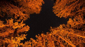 Canopy Earth Fall Foliage Forest Night Stars Tree Orange Color 6016x4016 Wallpaper