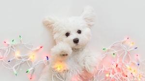 Dog Baby Animal Christmas Lights Puppy 2000x1333 wallpaper