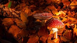 Earth Mushroom 2048x1363 Wallpaper