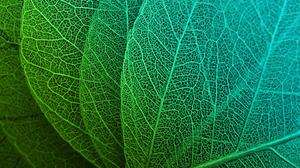 Leaf 2880x1800 wallpaper