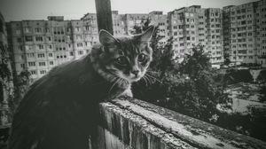 Cats Feline Mammals Animals Building Trees Outdoors Monochrome 4190x2359 Wallpaper