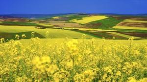 Nature Field Summer Landscape Yellow Flower 2048x1365 wallpaper