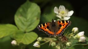 Animal Butterfly 3840x2160 Wallpaper