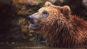 Bear Wildlife Predator Animal 2048x1384 Wallpaper